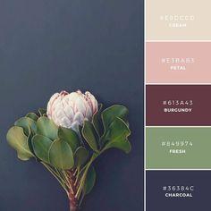 ◆Fall Collection このカラーパレットは、伝統的(英: tranditional)でアンティーク(英: Antique)な雰囲気を表現します。洗練された(英: Refine)、大人っぽい(英: Mature)商品などにどうぞ。
