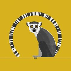 Ring Tailed Lemur  #vector #illustration #animals #wildlife