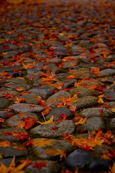 落ち葉 leaves in shades of red and orange on rocks. So beautiful and peaceful! Autumn Day, Autumn Leaves, Fallen Leaves, Autumn Walks, Autumn Morning, Red Leaves, Seasons Of The Year, Belleza Natural, Autumn Inspiration