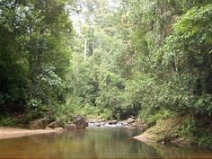 Reserva florestal Sinharaja, Sri Lanka