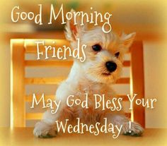 Wednesday Morning Images, Happy Wednesday Pictures, Wednesday Hump Day, Wednesday Greetings, Blessed Wednesday, Happy Wednesday Quotes, Wacky Wednesday, Wednesday Memes, Wonderful Wednesday
