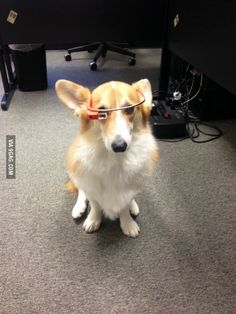 We sit our office corgi like this when guests visit and pretend like it's business as usual.