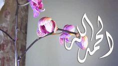 اللّهُمـَّ آرزُقنآ حُـسنَ الخَآتِمة: كلمہ بسيطہ: تھون وجعك ، تزيد فرحك تبث الرضآ في دآخ...