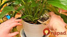 Mliečna výživa urobí s vašimi kvetmi zázraky! Polejte ich mliekom a uvidíte sami. Samos, Ale, Plants, Ale Beer, Plant, Ales, Planets, Beer