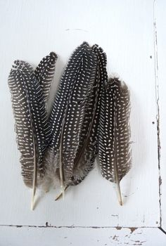Veren spikkel setje / black and white / feathers White Feathers, Bird Feathers, Feather Art, Feather Drawing, Feather Crafts, Guinea Fowl, Texture Photography, Natural History, Wings