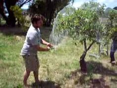 Great video on putting netting on fruit trees