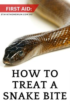 How to Treat A Snake Bite - Stay At Home Mum   Snake bites are an unfortunate reality of living in Australia.With that in mind, it pays to know how to treat a snake bite.