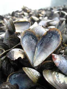 "Sea Shell Heart - mussels - or ""moules"" - can be bought from the local fishermen in Selsey if you are having a party! You can't get fresher than that! I Love Heart, Happy Heart, My Heart, Humble Heart, Heart In Nature, Heart Art, Tableaux Vivants, Photo Images, Am Meer"