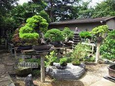 Znalezione obrazy dla zapytania 盆栽