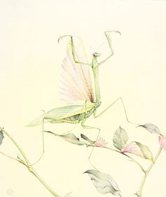 illustrations for Fabre's Book of Insects (1921) by Edward Julius Detmold