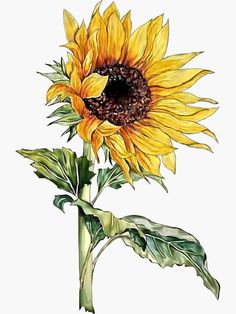 Yellow Sunflower Painted In Watercolor Sunflower Sketches, Sunflower Illustration, Sunflower Drawing, Sunflower Art, Watercolor Sunflower, Sunflower Pattern, Yellow Sunflower, Watercolor Illustration, Watercolor Flowers
