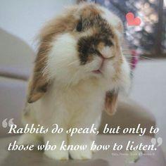 Are you listening? #rabbit #bunnies #bunny #cuteanimals #pets