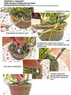 Paixão por orquídeas - Meu orquidário: Fazendo mudas de orquídeas - Parte I…