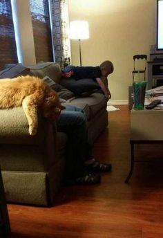 Funny cats - part 225 (40 pics + 10 gifs)
