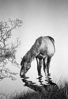 Horse Drinking... Pen & Ink Print by Gene Matras