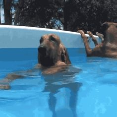 Funny animal gifs - part 212 (10 gifs)