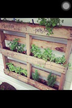Love this pallet for an herb garden. So cute and easy and cheap!