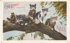 View from the Birdhouse: Vintage Cat Postcards are the Cat's Meow
