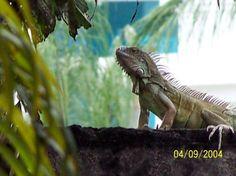 Parque de la iguanas: Guayaquil