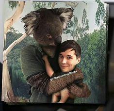 Literally it's a freaking koala holding Dan