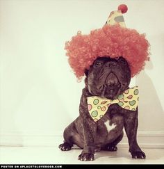 french-bulldog-ready-for-halloween