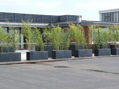 1000 images about inrichting buitenkamer on pinterest met tuin and van - Bamboe in bakken terras ...