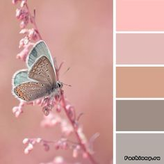 цвет color schemes, color balance и color swatches Bedroom Color Schemes, Colour Schemes, Color Combos, Color Patterns, Bedroom Colours, Colour Pallette, Color Palate, Color Concept, Decoration Palette