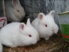 SWEET SMALL WHITE RABBITS White Rabbits, Sweet, Youtube, White Bunnies, Candy