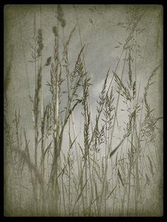 Fototapete vintage style (Nr. 8997) www.berlintapete.de