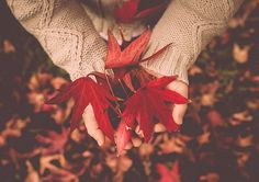 Image about autumn in Fall/Halloween 🍁🍂🎃 by Whitney Autumn Day, Autumn Leaves, Fall Winter, Autumn Poem, Happy Turkey Day, All Falls Down, Fall Photos, Photography Backdrops, Red Apple