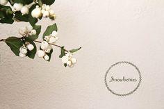 winter floral arrangements snowberries from honey of a thousand flowers Winter Floral Arrangements, Floral Centerpieces, Reception Decorations, Flower Decorations, Winter Wedding Flowers, Winter Weddings, Best Destination Wedding Locations, Solomons Seal, Flower Show