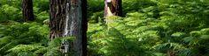 miguel ferrer fotos pinar de Leiria  2017