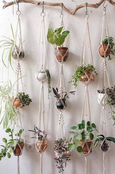 Macramé Plant Wall Branch Hanger #macramehanging ★ Modern and unique wall planter pots made of plastic, ceramic, and metal to decorate your walls with. #wallplanterpots #plants #plantpots #walldecor #pots