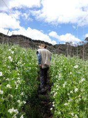 Páramo Verjón Bajo - Descubriendo 7 Tesoros Naturales en Bogotá