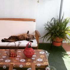 Domingo de sofá #catsofinstagram #cats #cat #gatos @catsofinstagram @cats_of_instagram #migatoesunico Objects, Photo And Video, Instagram, Table, Home Decor, Gatos, Domingo, Decoration Home, Room Decor