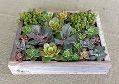 Rustic Wooden Succulent Boxes, Succulent Centerpiece, Planted Succulent Box, Succulent Gifts •• by Second Nature Succulents