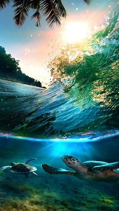 laperwa  » Blog Archive    » Tropical-Sea-Island-Turtles