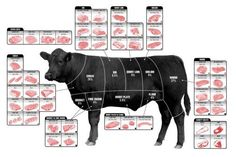 Beef Cuts Of Meat Butcher Chart Cattle Diagram Poster 24inx36in Poster 24x36