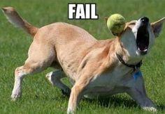 Hilarious animal fails!