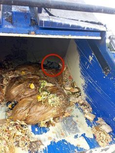 Heroes!!! Garbagemen Heard Tiny Cries For Help In All This Trash. Read the attached story.