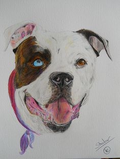 "#Art Commissioned work ""Shadow"" American Bulldog #dog #portrait"