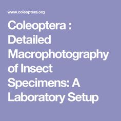 Coleoptera : Detailed Macrophotography of Insect Specimens: A Laboratory Setup