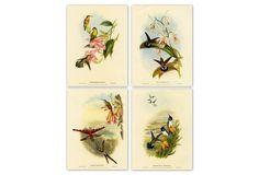 John Gould, Hummingbirds II, 1865