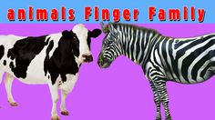 3d Animals Finger Family Nursery Kids Song | Cow,Zebra,Camel,Dog