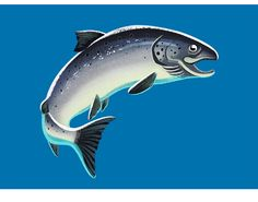 Illustration by Jussi Kaakinen for Pirkka, Ruokakesko Oy, 2015 Finland Finland, Whale, Fish, Illustration, Instagram Posts, Animals, Whales, Animales, Animaux