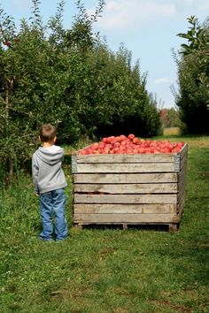 My son at the apple orchard