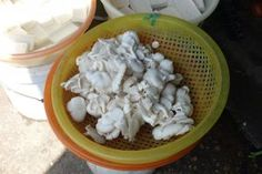 Oyster mushrooms belong to the most commonly cultivated edible mushrooms in the world. You can find them in Aisian, European, American cuisine. Edible Mushrooms, Stuffed Mushrooms, Grow Kit, Travel Info, Street Food, Oysters, Documentary, Food Food, Food Videos