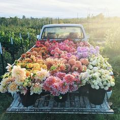This bunch of flowers on a truck is the perfect floral inspiration. Bunch Of Flowers, Pretty Flowers, Fresh Flowers, Prettiest Flowers, Potted Flowers, Images Of Flowers, Colorful Flowers, Field Of Flowers, Pink Flowers