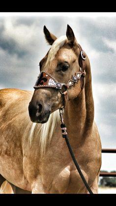 Ranch Dress'n - Fluer De Lis Bronc Halter, $190.00 (http://ranchdressn.com/fluer-de-lis-bronc-halter/)