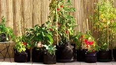 Growing Vegetables and Fruits In Your Apartment – The Gardening Spot